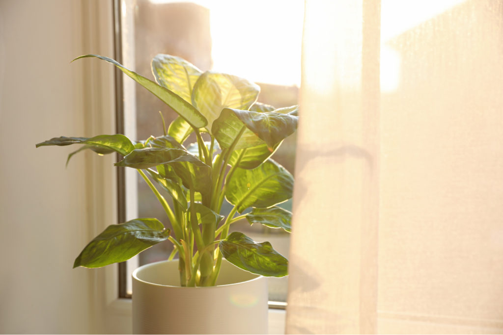 Indoor Plant Near Window