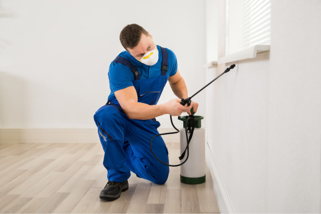 Pest Control In First Home
