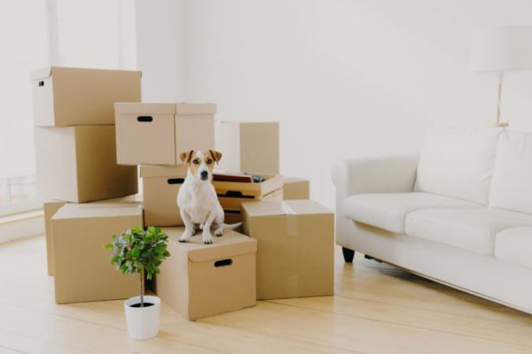 Moving home with a dog